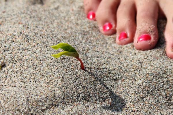 Liten spire og rødlakkerte tær i sanden