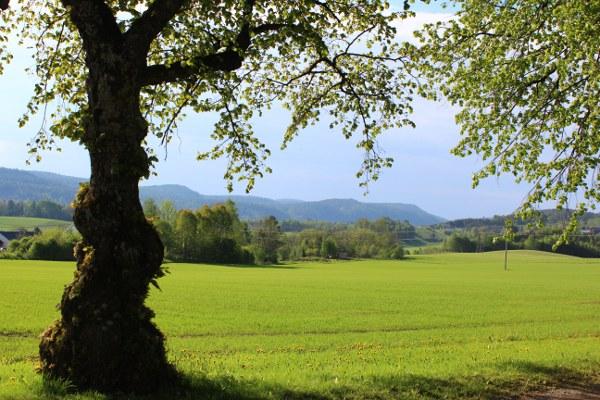 Grønne jorder og gammel lind