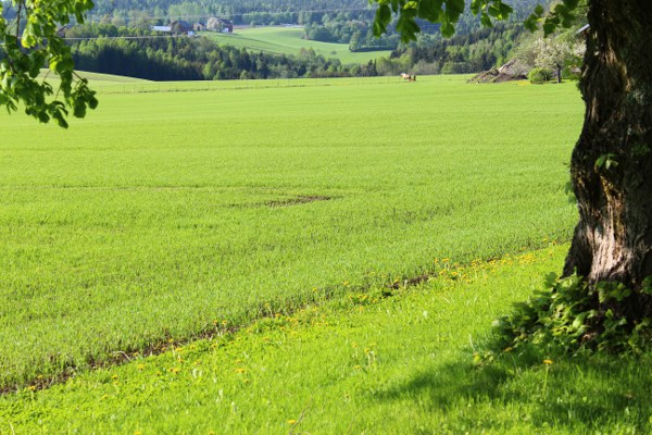 grønne jorder