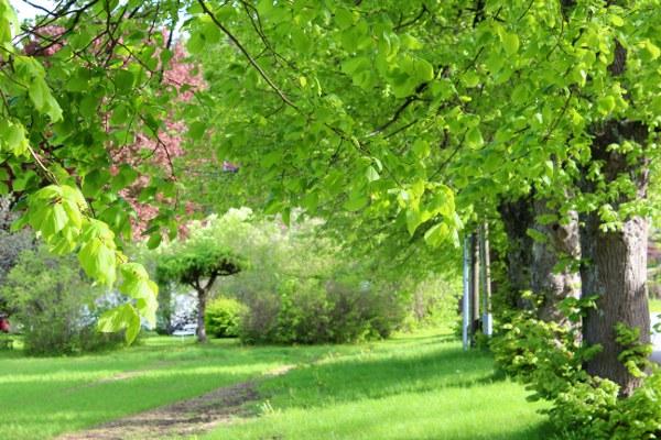 Grønn hage