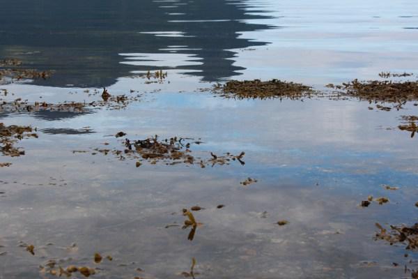 Tang i stille vann