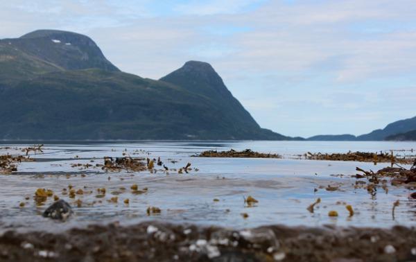 Tang og stille sjø med Tustnastabbene i bakgrunn