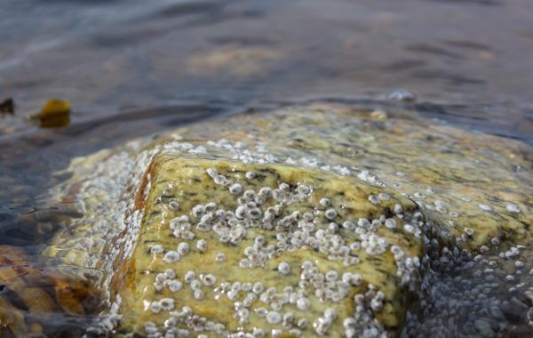 Glatt stein med rur i vannkanten