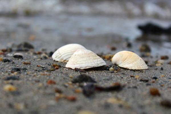 Sand i fjæra med hvite skjell