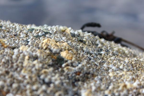 Stor stein med hvit rur i sjøkanten