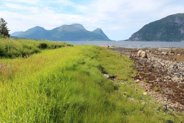 Gresseng ved steinstranda med Tustnastabbene og Ertvågøya i bakgrunn