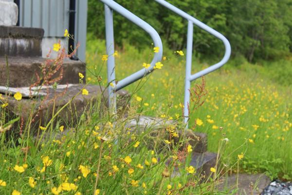 Feriehus i blomstereng