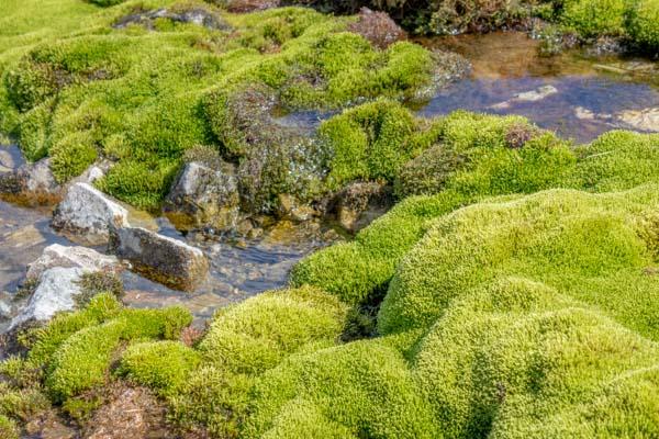 Mosekledt vannkilde i Ringebufjellet