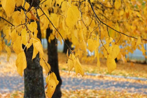 Gyldne høstfarger