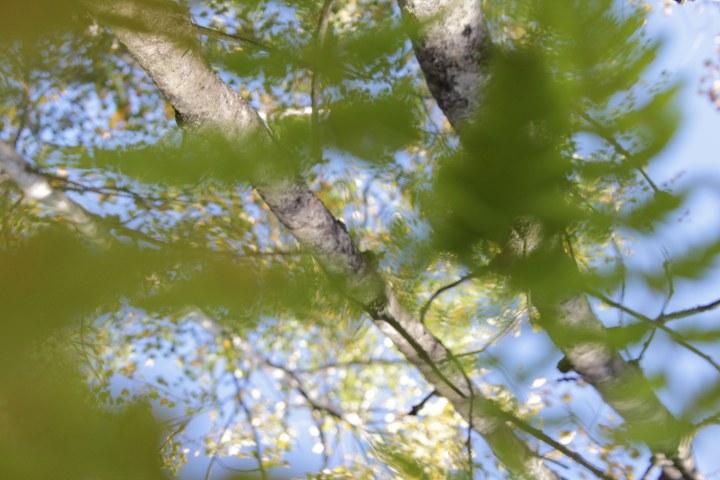høstskog med perspektiv fra bakken