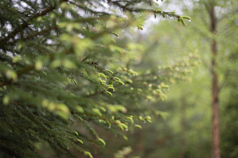 Vårskog i regn-119-12