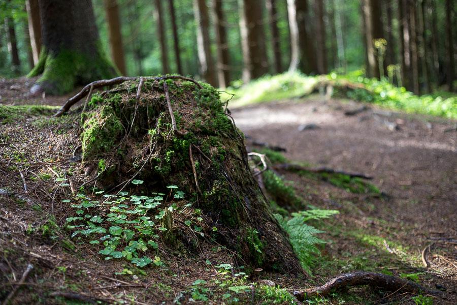 Skogssti etter regn Sætre juli 2016-20-7