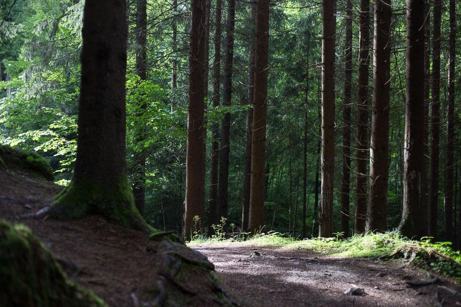 Skogssti etter regn Sætre juli 2016-37-15