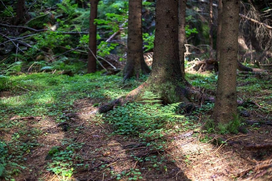 Skogssti etter regn Sætre juli 2016-63-24