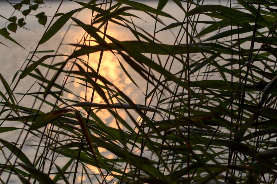 Siv solnedgang