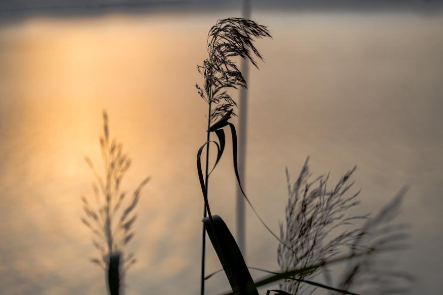 Siv vann solnedgang