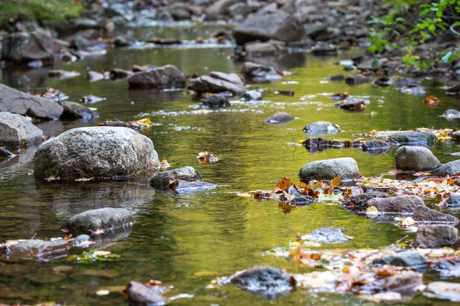 høstfarger i elv