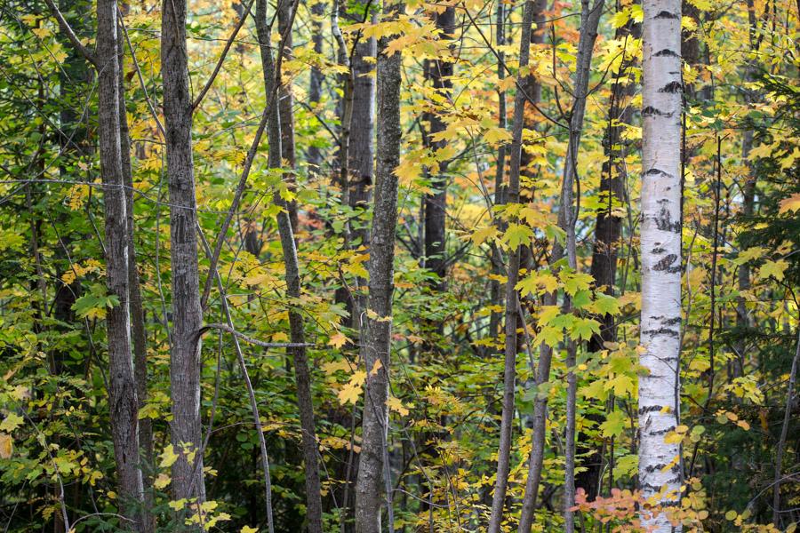 høst skog